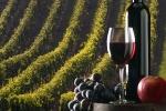 Mado con vitigno